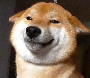 Shiba Inu qui sourit
